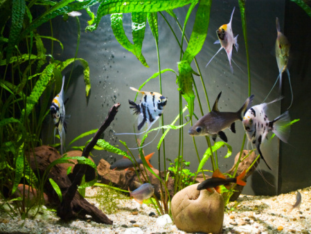 Best Fish And Aquarium Supply Stores In Seattle – CBS Seattle